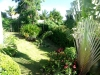 Jardin tropical