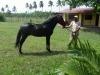 Un des chevaux compris dans la vente