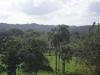 Splendida Vista