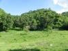 Heuvels vol mahonie