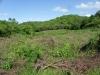 Zone voor nieuwe mahonie bomen