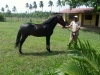 Eén van de inbegrepen paarden