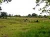 Ranch in Veragua