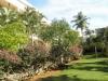 тропический сад комплекса
