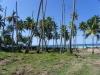 кокосовая роща