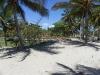 кокосовые пальмы на участке