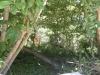 окружающая растительность