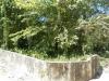 лиственные деревья на участке